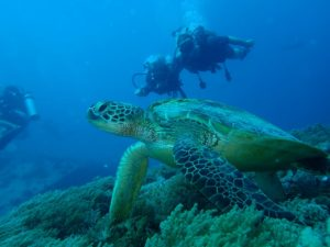 Our divers and a Hawksbill Turtule - 12 March 2019